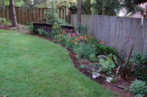 Photo of backyard for an article about landscaping mistakes.
