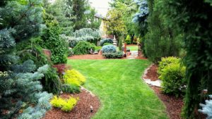 Photo of a beautifully landscaped yard for an article about unique yard projects.