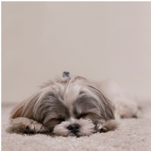 Photo of a cute sleeping puppy for an article about Plainfield weekend events.